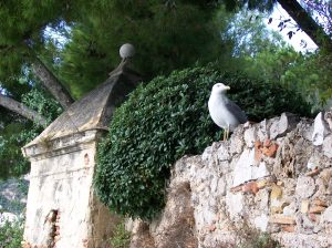 Seagull on the Garden Wall