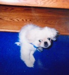 The earliest picture of Ming as a pup.